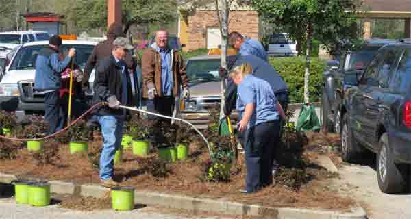 City workers plant more than 150 rose bushes Monday as part of a beautification process throughout the city.