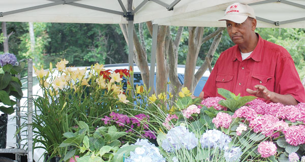 Johnny Simmons works to prepare plants for sale during Saturday's annual Blueberry Festival