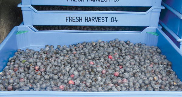 Fresh-Berries