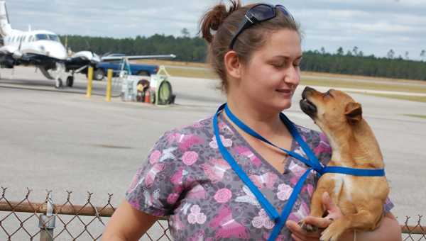 Penny Pettis of the Escambia County Humane Society gets kisses from one of the puppies set to be transferred to Florida Friday.