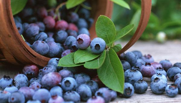 Spills-Blueberry